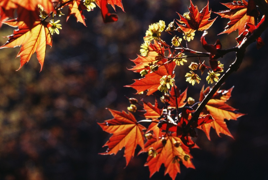 Autumn: The Most Wonderful Time of the Year